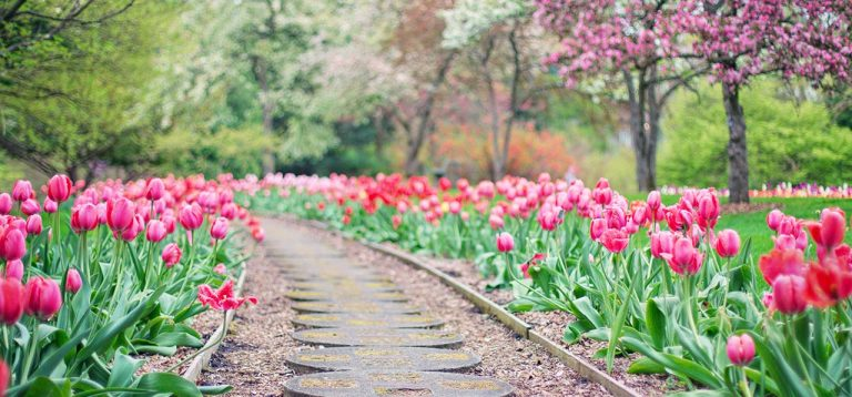 7 Power Tools That Will Help You Get Your Dream Garden Ready In No Time