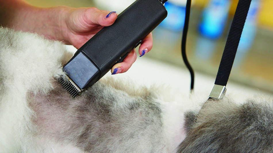 Best Dog and Cat Hair Clippers: Review and Buying Guide