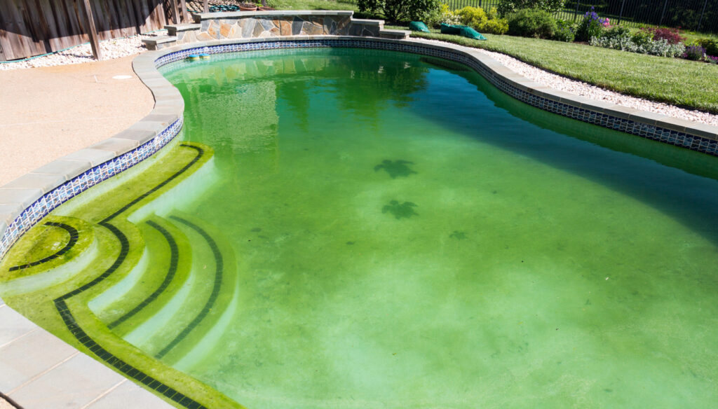 How to Get Rid of Mustard Algae – an Exclusive Guide 4